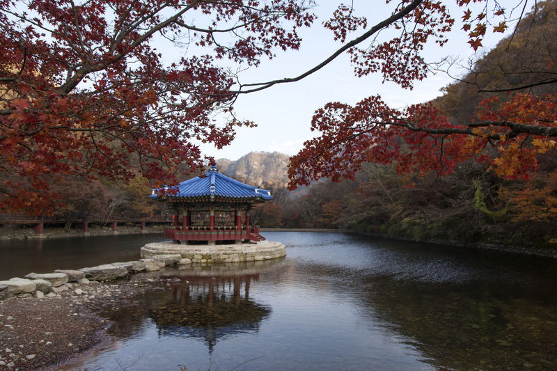 autumn landscape at Naejangsan Mountain in Jeonbuk, South Korea Autumn Autumn Colors Fall Beauty Architecture Autumn Beauty In Nature Branch Building Exterior Built Structure Day Growth Lake Lake View Maple Nature No People Outdoors Scenics Sky Tranquil Scene Tranquility Travel Destinations Tree Water