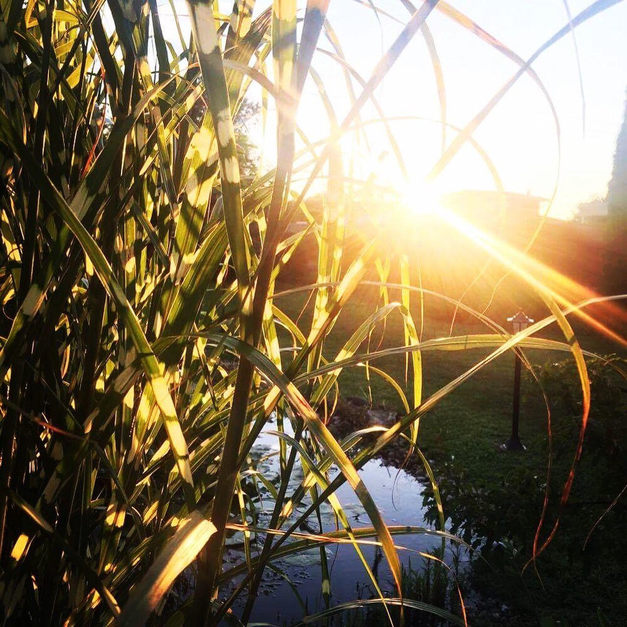 Sunlight Sun Grass Beauty In Nature Nature Lake Garden Garden Photography Garden Art