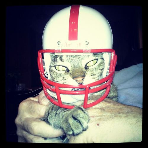Kitty GoBigRed Huskers Trb_cf_halloween_party