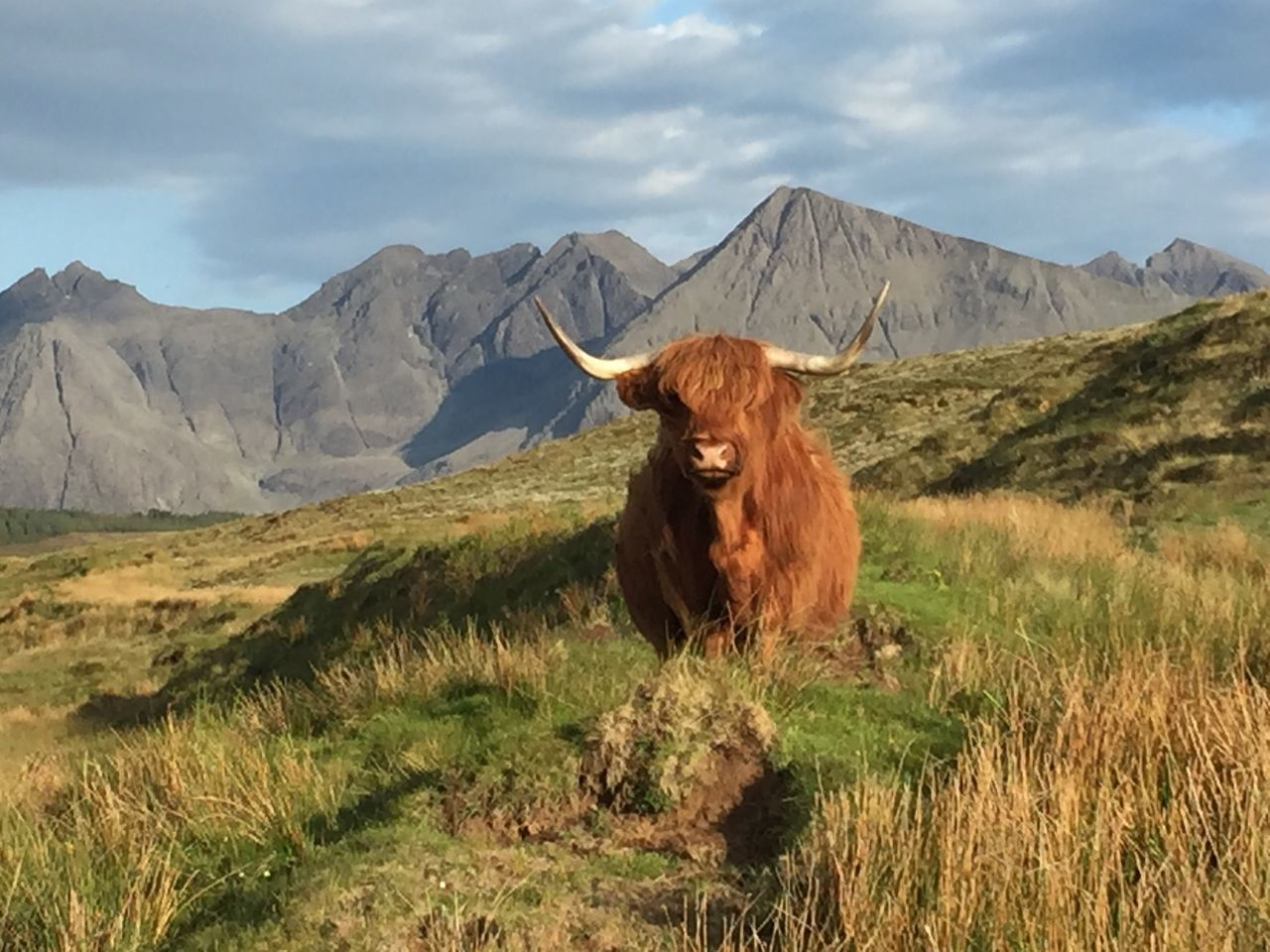 Beautiful stock photos of tiere,  Animal Themes,  Beauty In Nature,  Cattle,  Cloud - Sky