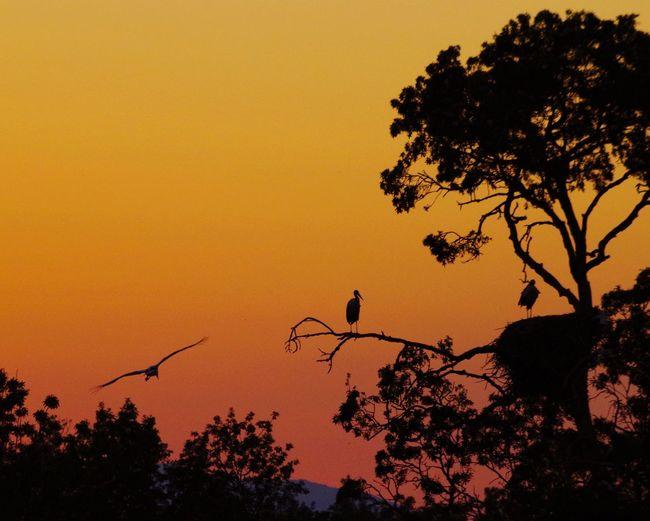 Bird Photography Birds_collection Stork Cigogne Aiguamolls De L'Empordà Sunset Sunset_collection Silhouette