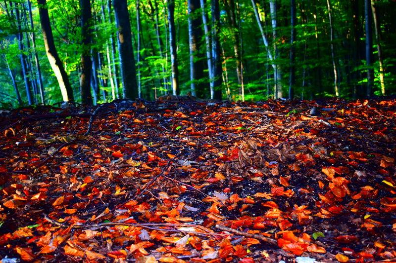 Forest Nature Forest Photography Tree Autumn Leaf Nikonphotography NikonD3300📷 Nofilterneeded Sundaywalk