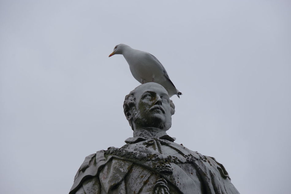 Wales Tenby Pembrokeshire Statue Historical Monuments Seagull