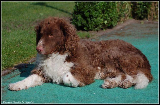 Dog Dog❤ DogLove Friesestabij Wetterhound Nikonphotography Nikon Nikond50