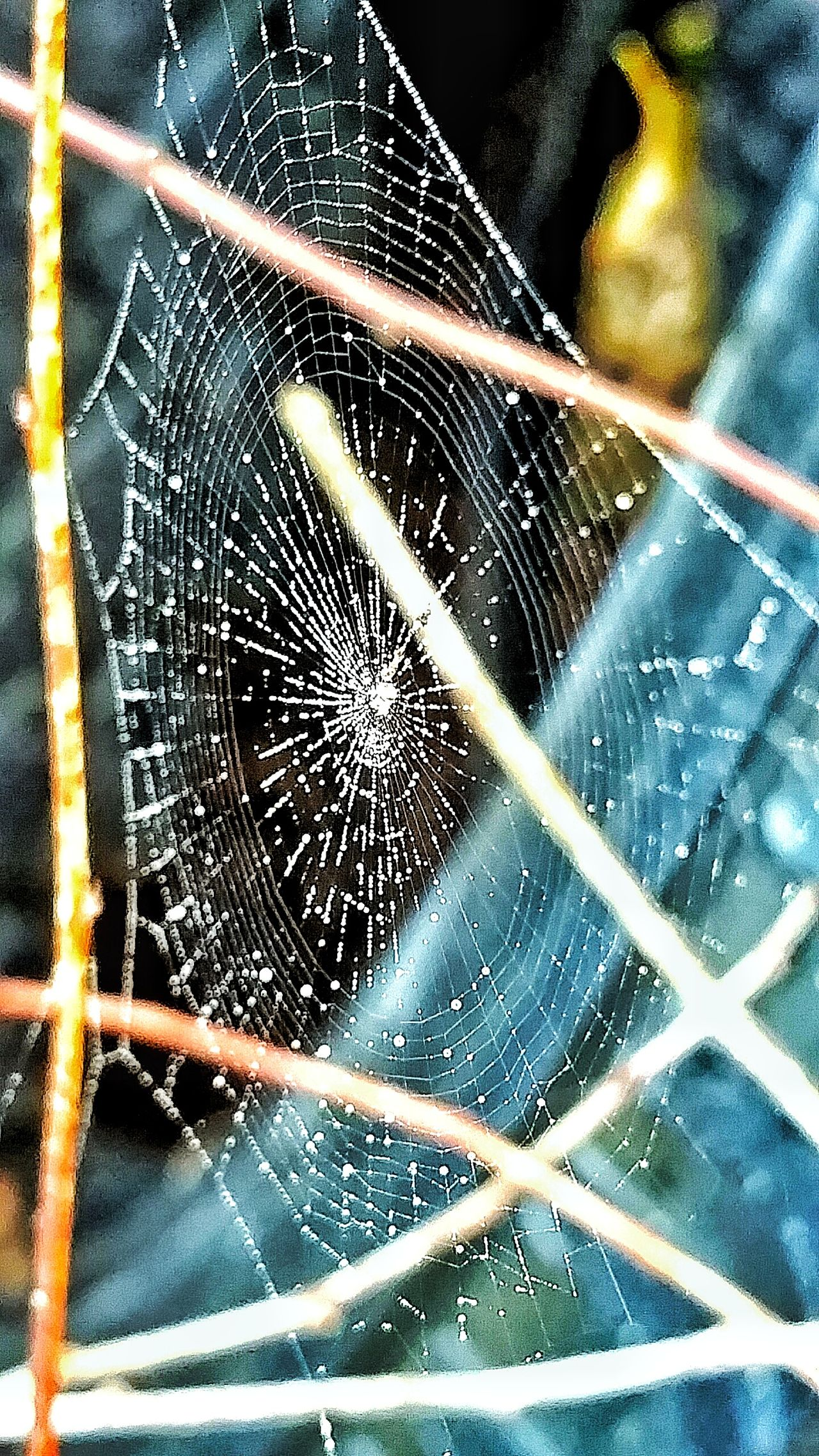 Spider Spider Web Close-up Fragility Dew Drops On Spider Web Foggy Morning Beauty In Nature Animals In The Wild Wet Pattern Dawn Dewdrops Sunrise Shapes And Forms Patterns In Nature Textured  Macro Designs In Nature Nature