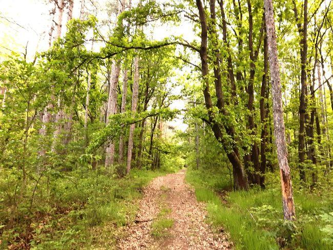 Springtime Hikingadventures Sunnyday☀️ Relaxing Nature Photography Magazine Cover Magazine Forest Photography