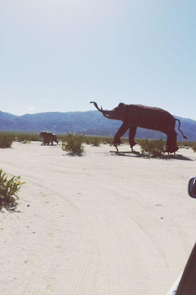 Landscapes With WhiteWall Desert Weird Borrego Springs