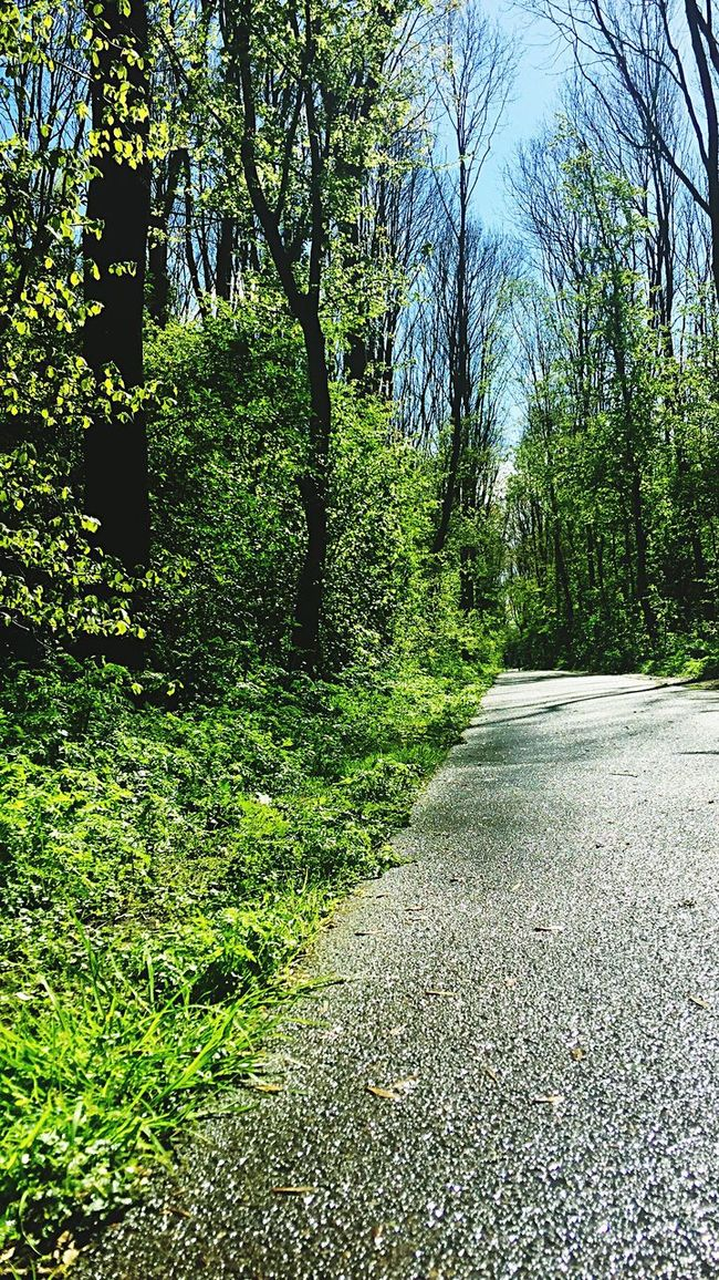 Beauty In Nature Nature Trees Landscape Taking Photos Sky Eye4photography  EE Love Connection! Eyemphotography Nature_collection Naturephotography Trees And Sky Outdoors Green Color Grassy Grass EyeEm Best Shots Street Streetphotography Forrest Nature Photography Up Close Street Photography Running