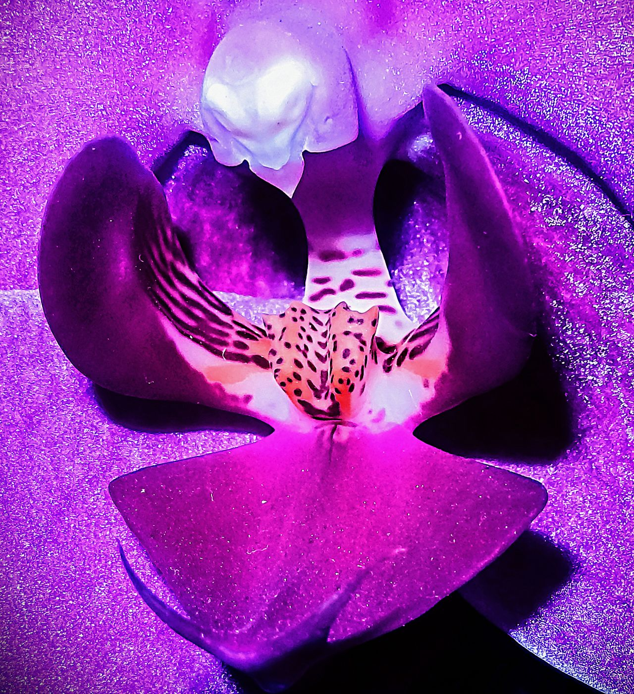 Lotus Alien Flower Purple Abstract Flower Head Close-up Biology Nature Beauty In Nature Samsungphotography Plant EyeEm Nature Lover Klique Klique Hello World Growth Maximum Edit Creativity Abstracts Lotus Lotus Flower Macro_flower Floral Check This Out