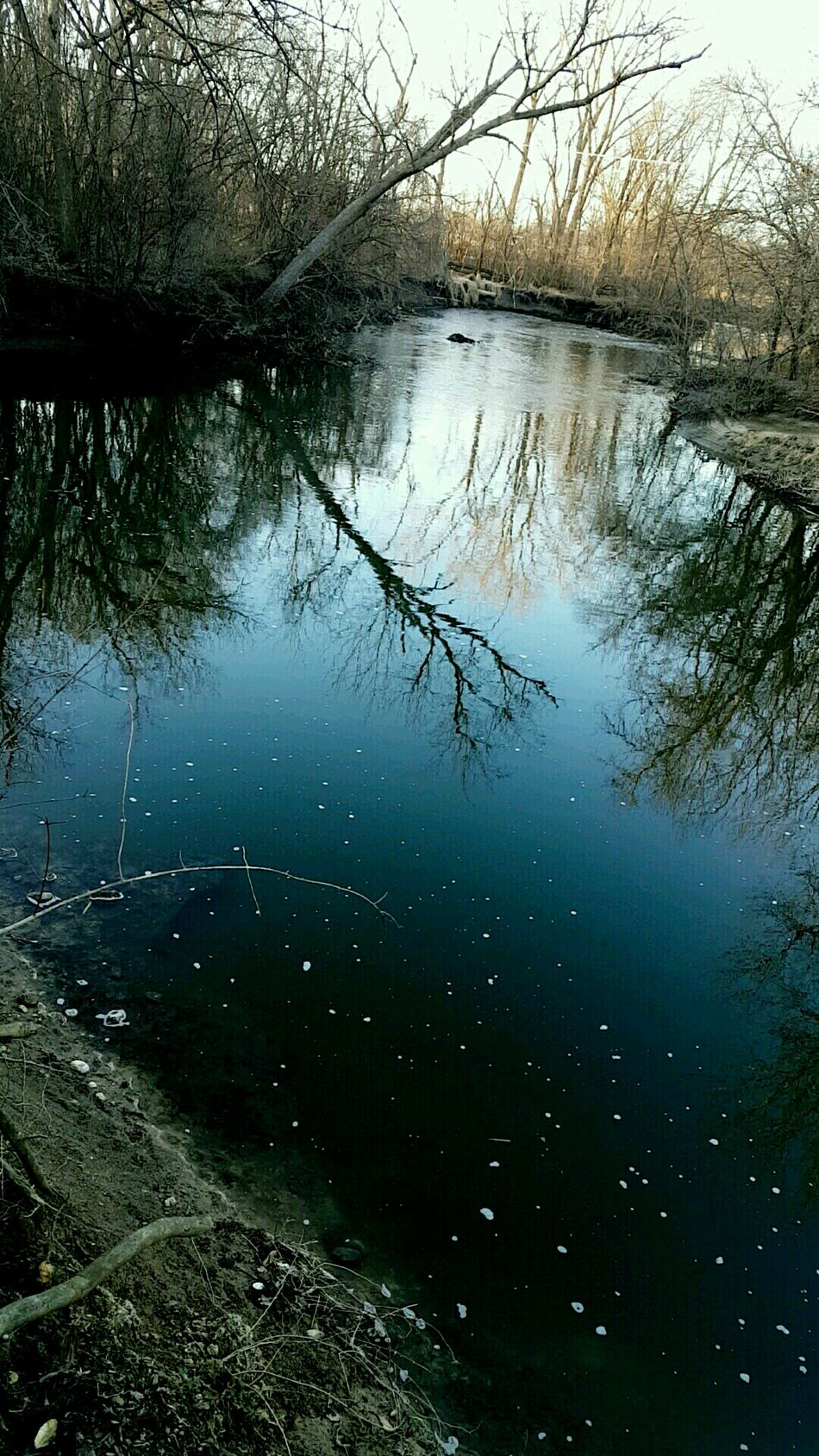 February 14.17 Tree Reflection Water No People Nature Branch Reflection Lake Backgrounds Outdoors Sky Close-up Day Creek Creekside Creekside Trail Freshness Woods Eldridge Eldridge Park At Dusk Rocks Beauty Beauty In Nature Tranquility Wilderness Scenics
