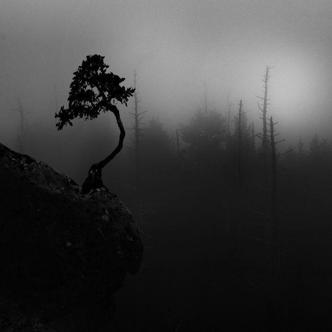 Nature Blackandwhite Landscape