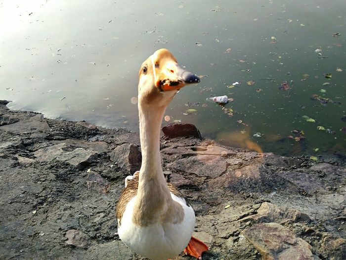 This innocent creature was asking food from us! Foody😏 Enjoying Life Naturelovers Animal Photography Harayana Colours Of Nature Nature_collection Lake View Travelling Photography