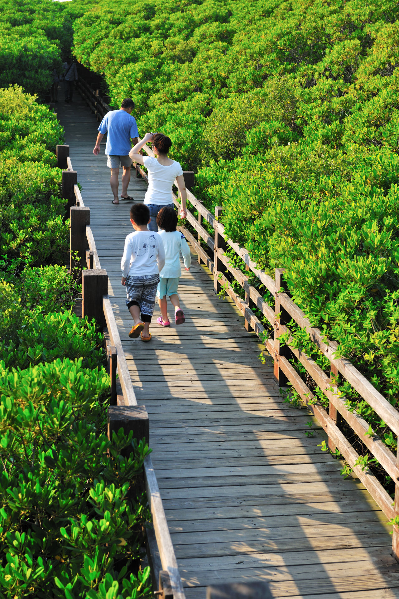 life Adult Bridge Child Community Day Ecology Females Go Sightseeing Large Group Of People Life Nature Outdoors Park People Road Take A Walk Togetherness Travel Tree Women Wood