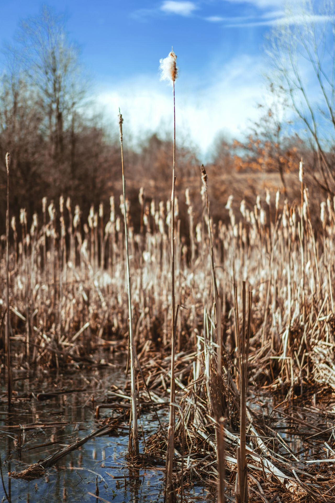 Nature Plant Outdoors Tranquility No People Beauty In Nature Tranquil Scene Sky Water Day Scenics Grass Cold Temperature Dried Plant Close-up Sony Beauty In Nature Nature Spring Zeiss 55 F/1.8 Day Freshness Growth Morning Tranquility The Week Of Eyeem EyeEmNewHere