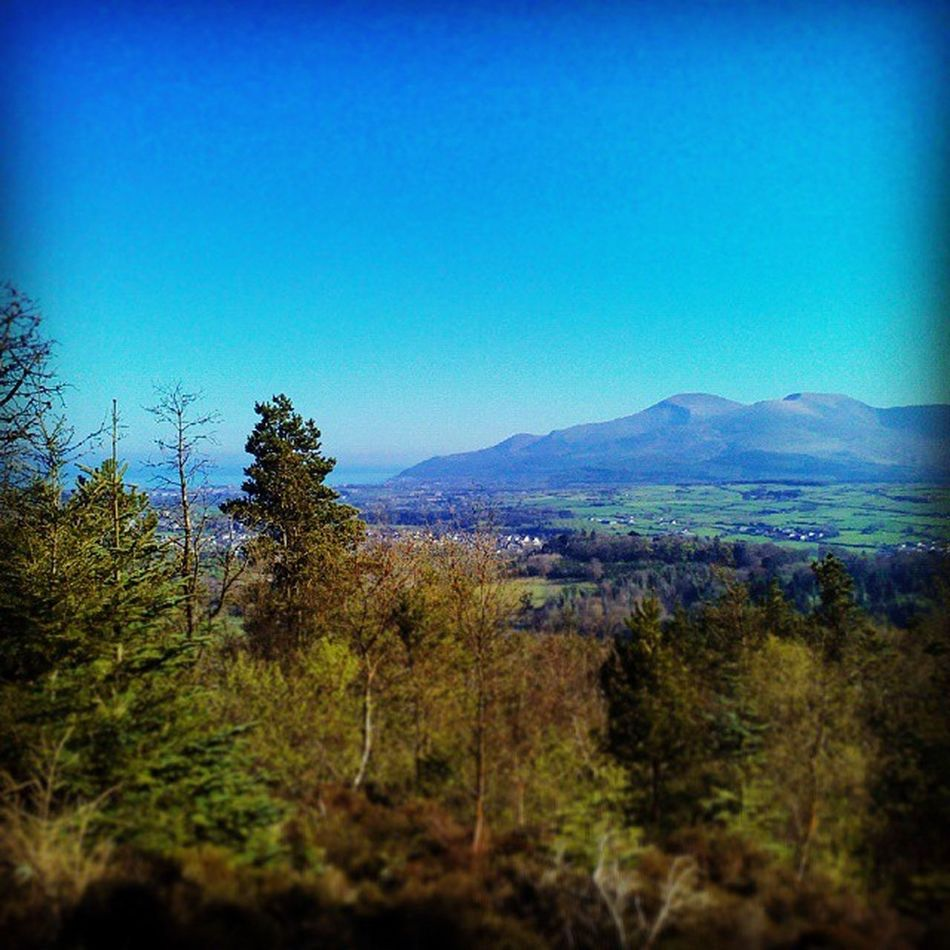 Veiw today from Castlewellan ForestPark of the Mournes and Newcastleni Ireland🍀 Northern Ireland Co. Down