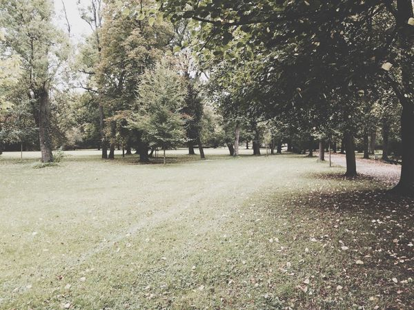 Heilbronn Heilbronn Park Autumn Walking Around