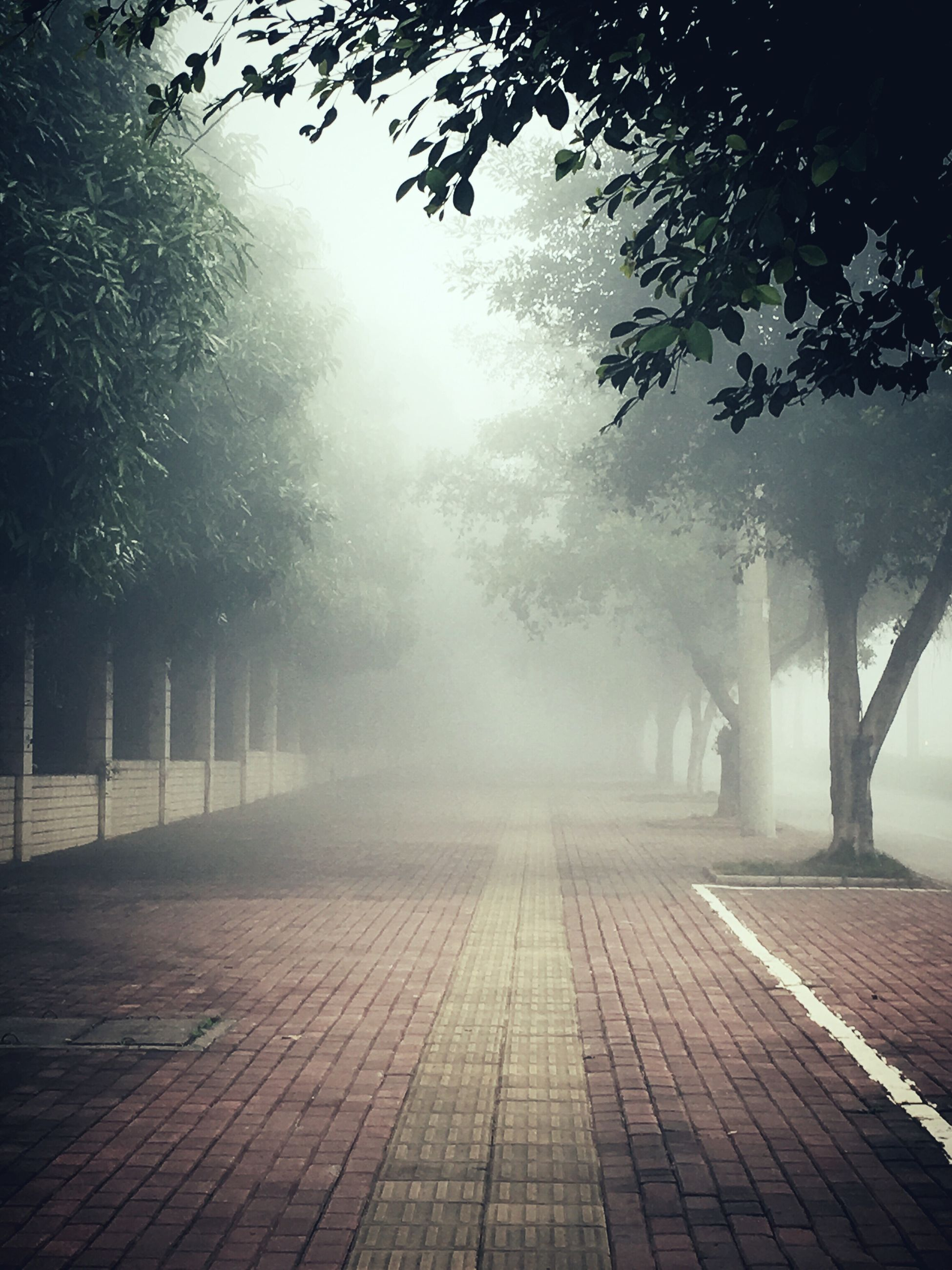 tree, fog, the way forward, foggy, weather, nature, sunlight, tranquility, sunbeam, footpath, day, tranquil scene, diminishing perspective, branch, park - man made space, outdoors, season, sky, no people, railing