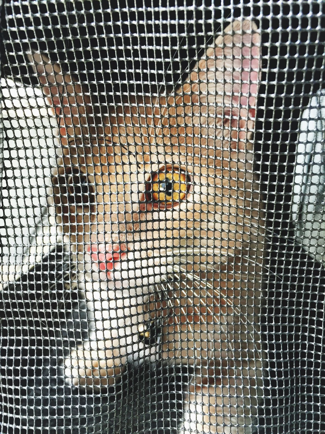 Cage Netting White Color Young Adult Women Birdcage Young Women Close-up Indoors  Mammal Day Cat Pussycat Moby