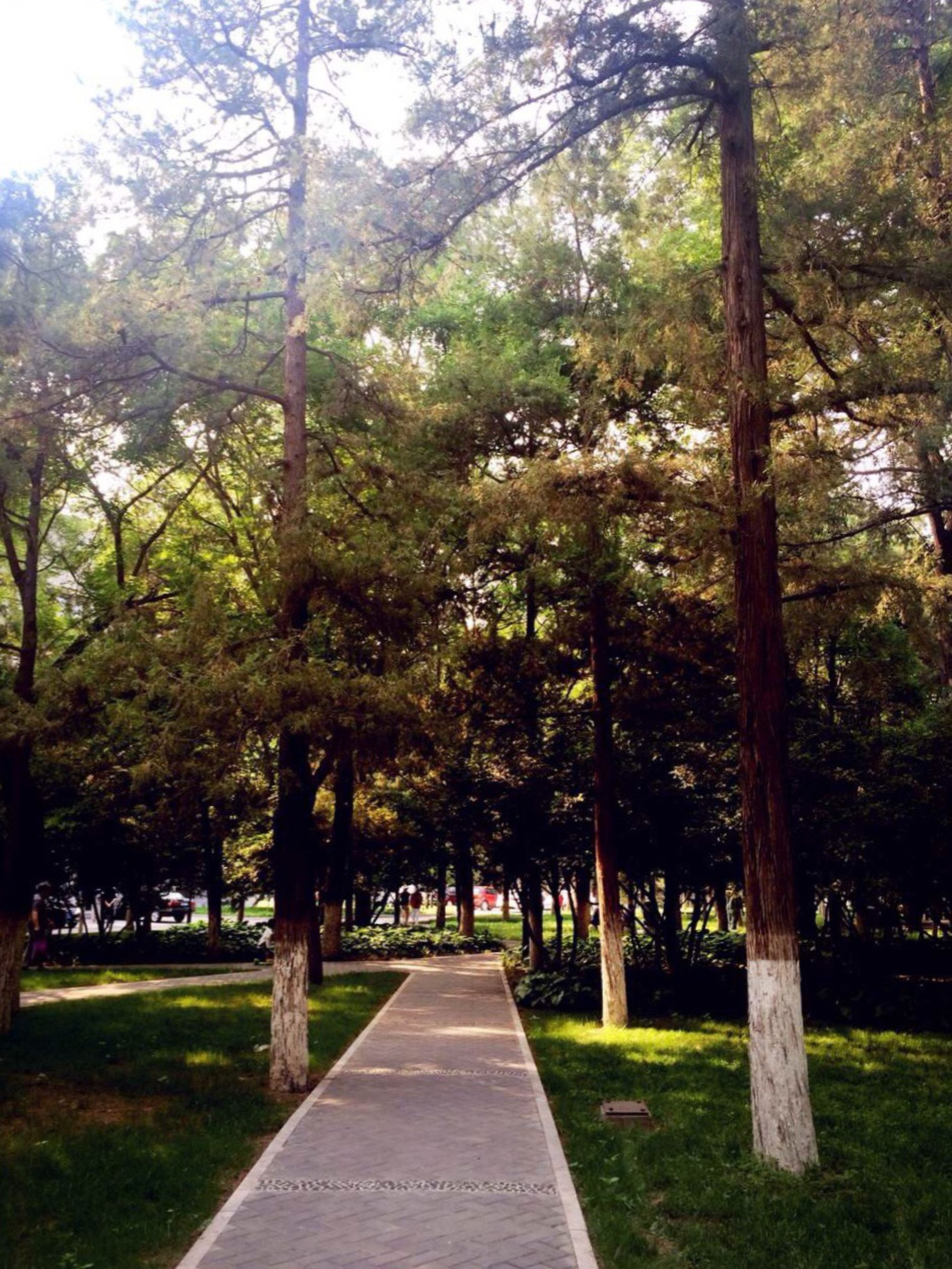 tree, the way forward, grass, park - man made space, tree trunk, growth, green color, footpath, tranquility, diminishing perspective, nature, treelined, tranquil scene, park, empty, sunlight, vanishing point, beauty in nature, walkway, shadow