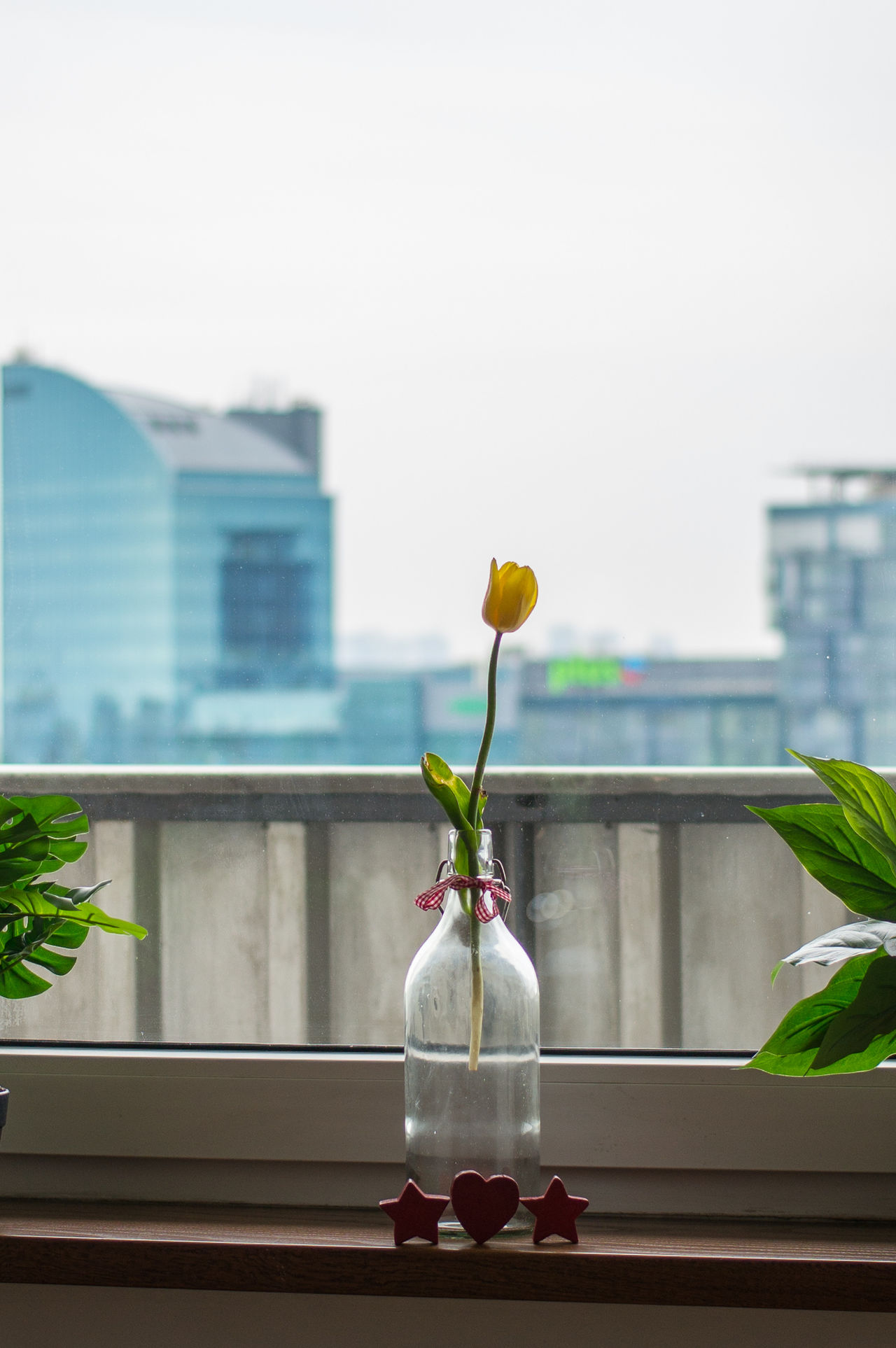 Day 81. work related. 365 Architecture Beauty In Nature Building Exterior Built Structure Close-up Day Flower Flower Head Focus On Foreground Fragility Freshness Growth Hanging Leaf Nature No People Outdoors Plant Rose - Flower Sky Vase Window Window Sill