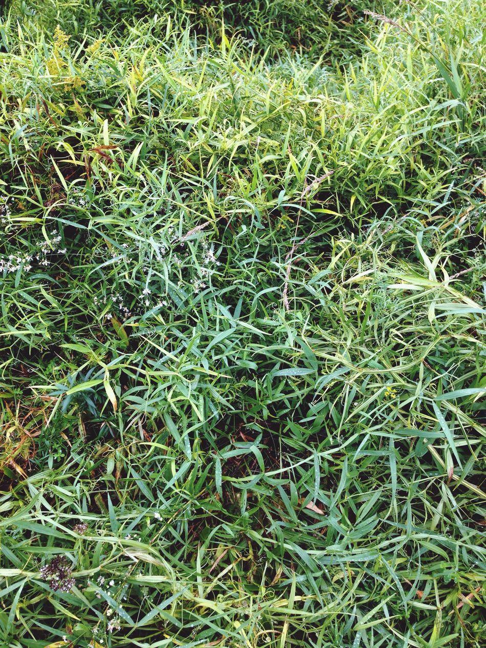 Étienne Gabriel Rousseau Grass Plants Nature Environment Green Green Grass EyeEm Nature Lover Under The Rain Raining Day