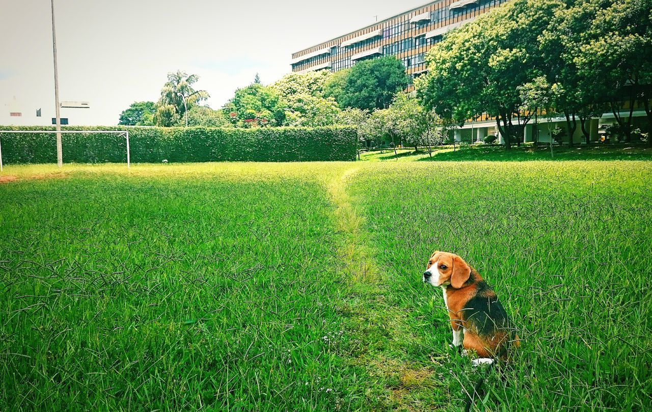 Beautiful stock photos of beagle, Animal Themes, Architecture, Beagle, Building