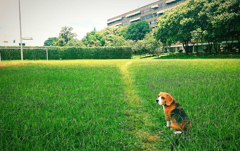 Beautiful stock photos of beagle, Animal Themes, Architecture, Beagle, Building