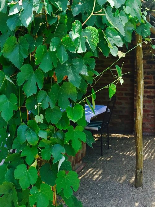 Just a corner Vineyard Vine Vines Green Green Green!  Green Vine Just Around The Corner Greenery