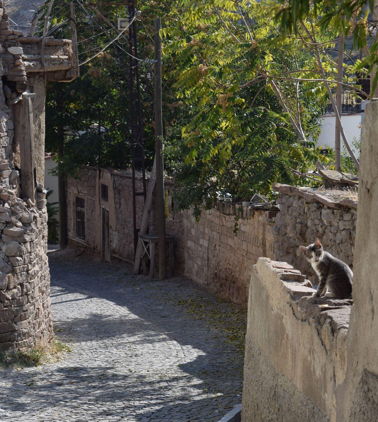 Tree No People Nature Animal Themes Built Structure Day One Animal Cat Outdoors Architecture Konya Konyagram Türkiye