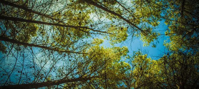 Cazadora De Imágenes Embalse Del Tranco Hornos De Segura Non-urban Scene Sierra Segura Sunny Tree Tree Trunk
