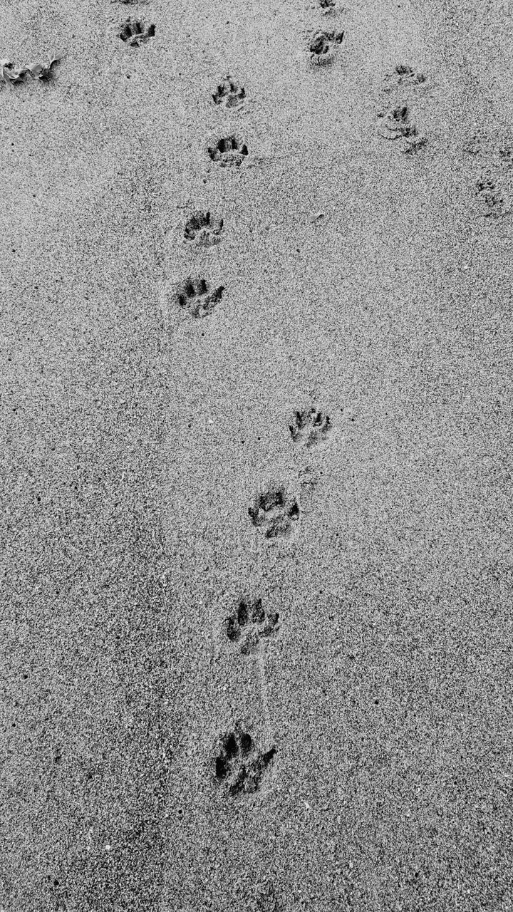 paw print, footprint, sand, beach, animal track, high angle view, track - imprint, no people, day, absence, outdoors, nature, close-up