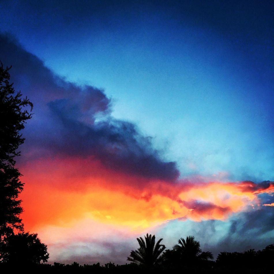 Sunset Miami 305