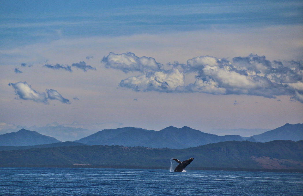 Adventure Beauty In Nature Breach Horizon Over Land Humpback Landscape Mexico Mountain Mountain Range Nature Nature Non-urban Scene Ocean Outdoors Remote Sky Tranquil Scene Tranquility Travel Traveling Whale Wild Wildlife Capturing Freedom Capture The Moment