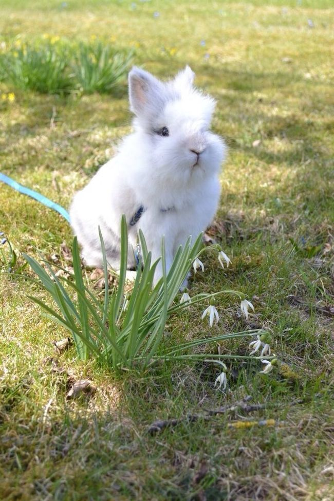 My rabbit simba <3