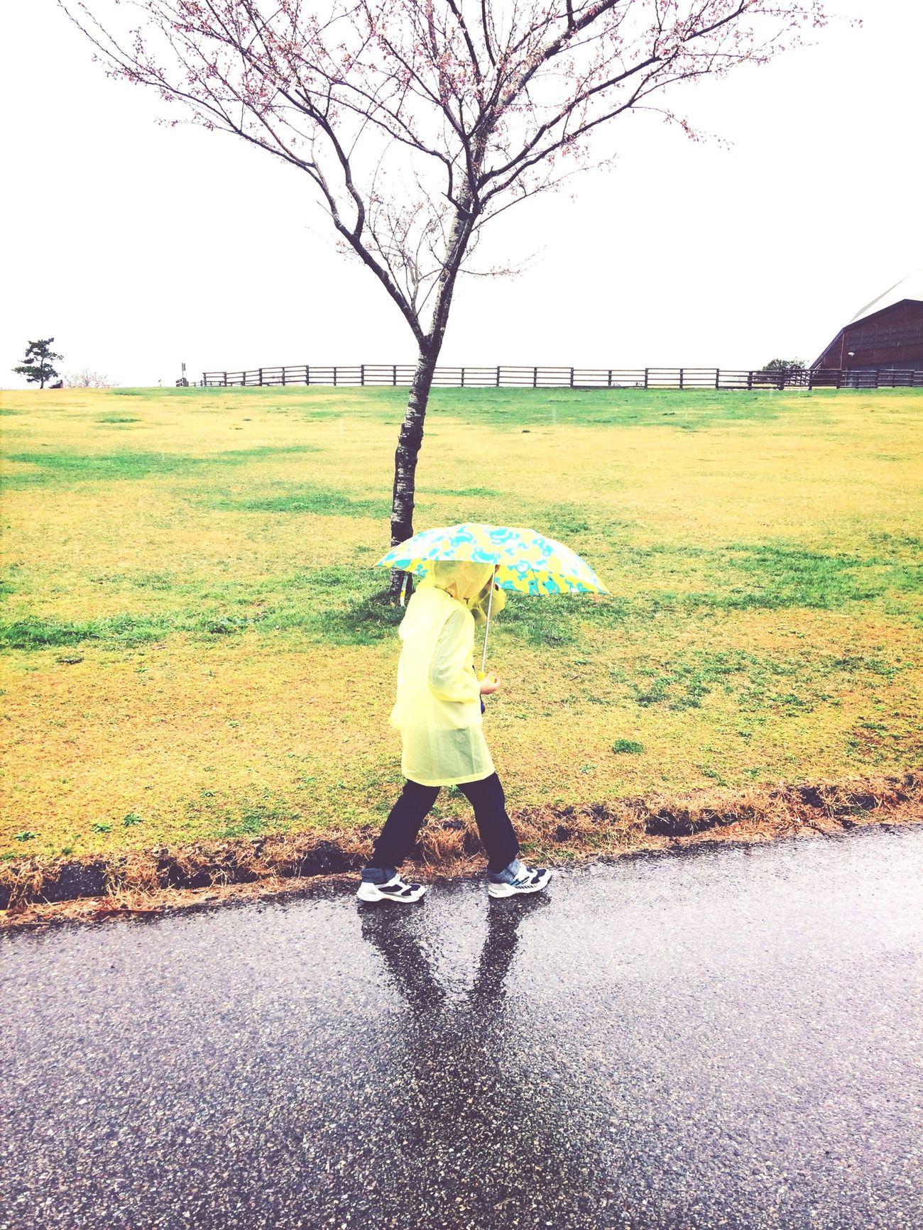 普段は目立ってありがたい黄色いレインコート。今日は菜の花に紛れる。  Rainy Days
