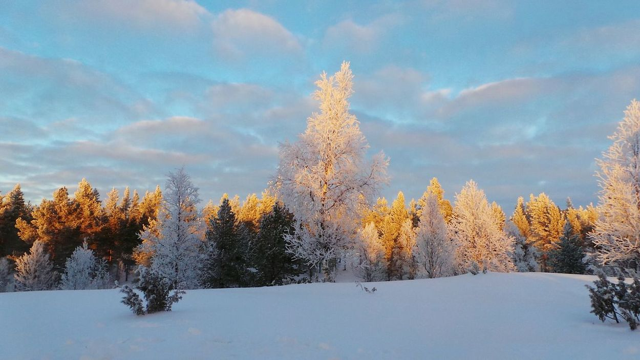 Tree No People Sky Forest Snow Cloud - Sky Nature Outdoors Beauty In Nature Sunset Winter Landscape Day Representing Finland Lapland, Finland Lapland Finlandia Saariselkå Lapponia Beauty In Nature Winter Travel Destinations