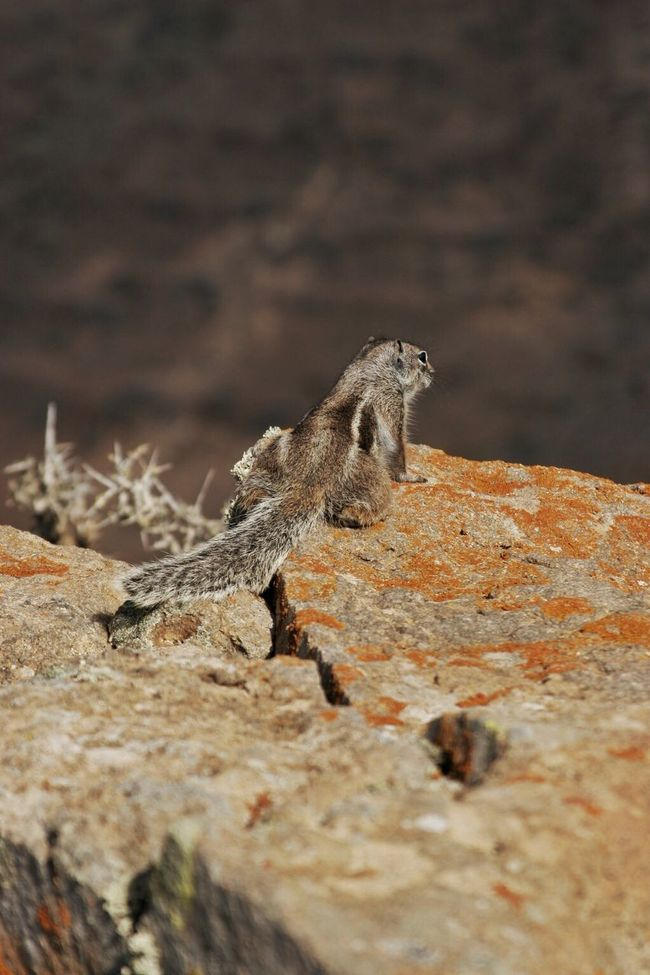 Into The Abyss Critter Chipmunk Nature Mountain Life Mountains Rocks Rough Life Dry Desert