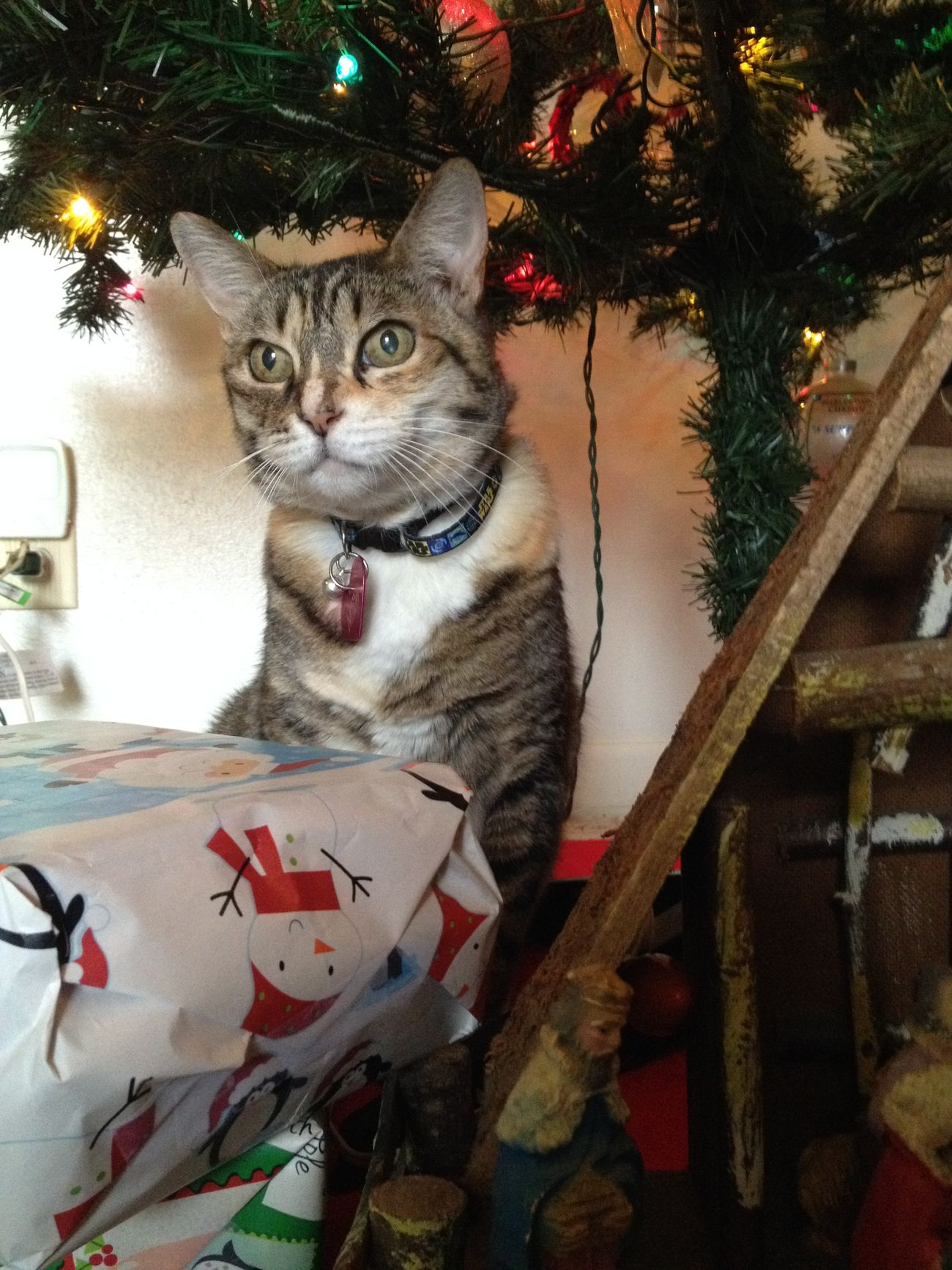 Mew the cat among the gifts Cat Lovers cat