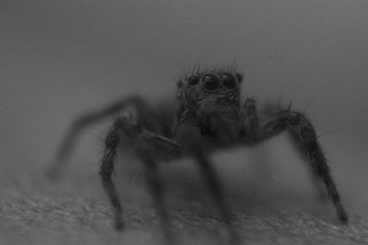 Spider Spider Nature_collection Eyenaturelover Spider Web Spiders Spiders Kingdom Spidersofinstagram Spiderweb Spiderworld