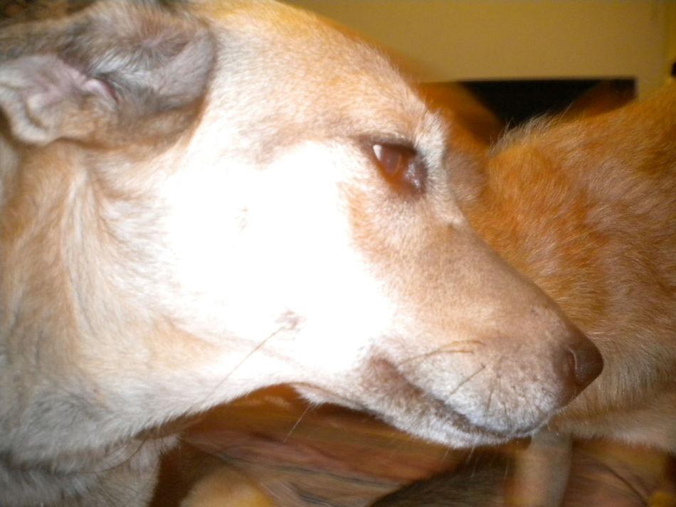 4 Patas Alegría All You Need Is Love Belleza Cancion Dogs EyeEm Eyes Familia Mia ... Kush Ojos Oliverio Mondongo Relaxing