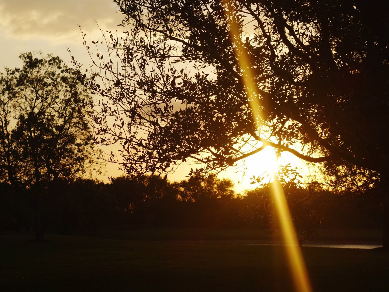 Sunset Tree Sun Nature Sunlight Silhouette No People Beauty In Nature Sky Outdoors Day