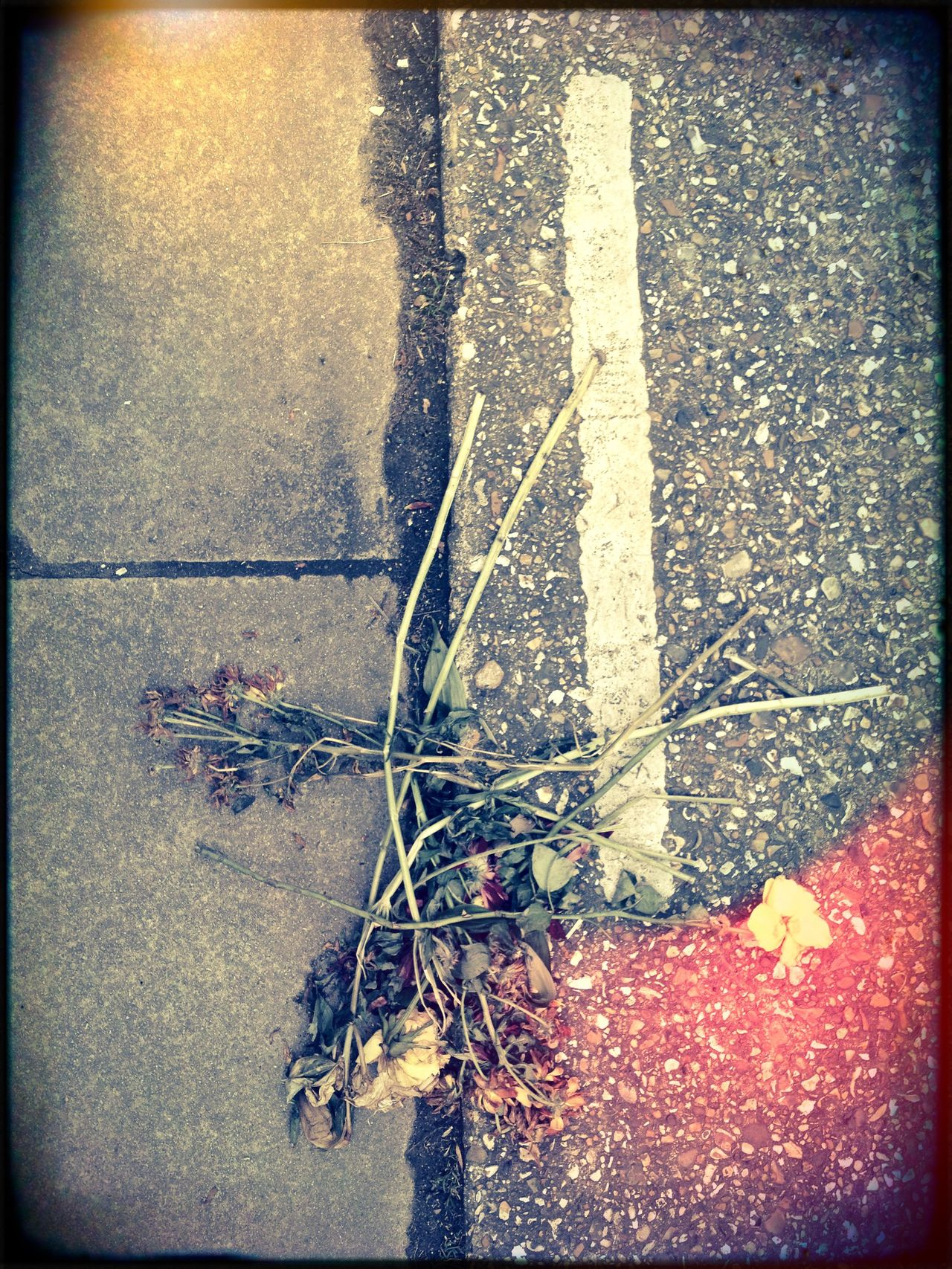 discarded flowers on the road Day Discarded Flowers Elevated View Flowers Ground Kerbside Lifestyles Outdoors Roadside