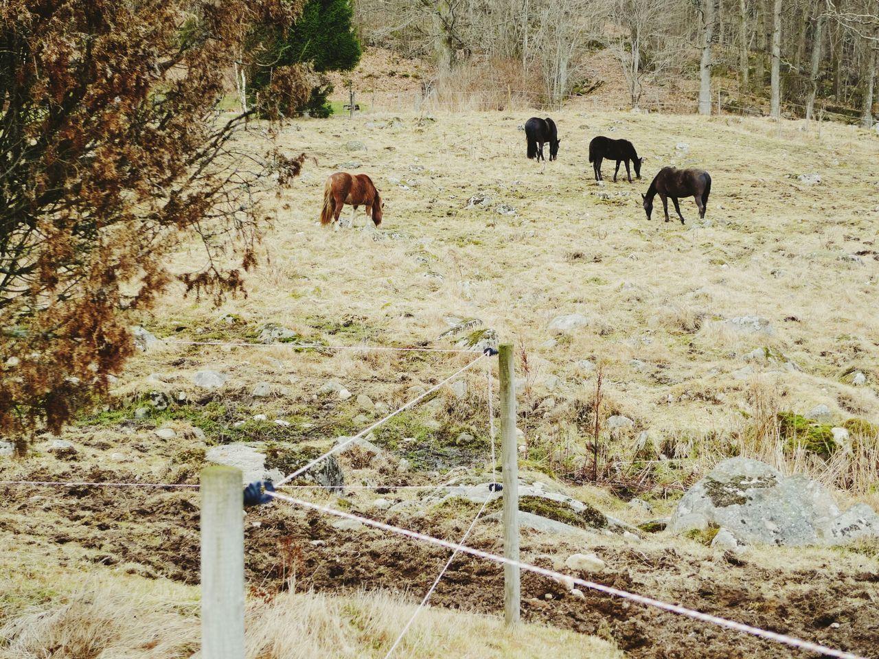 VSCO Cam I Love Horses Horses VSCO