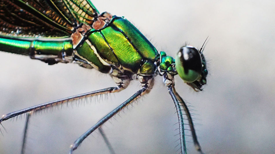 Green Lantern Close-up Dragonfly Eye Green Color Green Lantern  Macro Macro Photography Nature