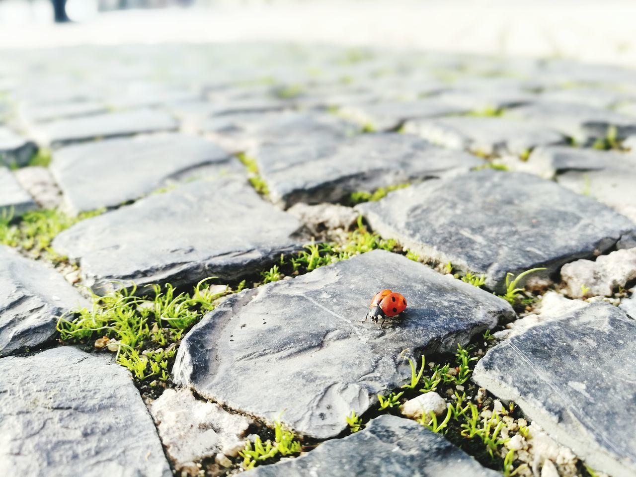 Ladybug 🐞 First Eyeem Photo