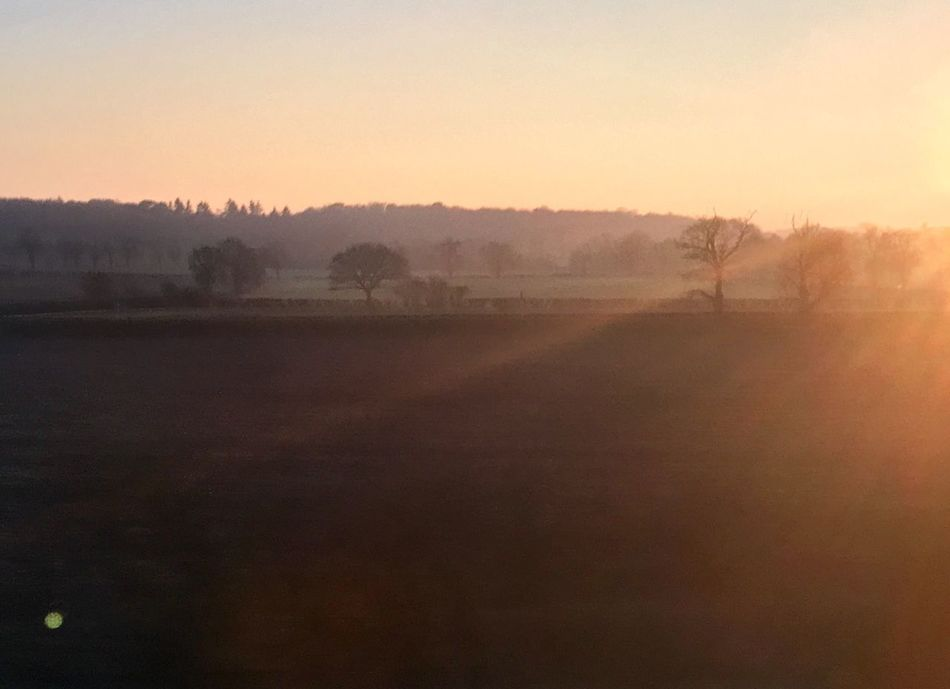 Nature Tree Fog Sunset Tranquility Beauty In Nature Landscape Rural Scene Outdoors
