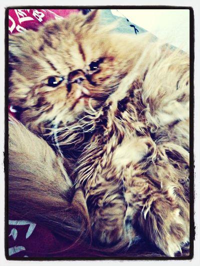 Epiccat' Relaxing Enjoying Life