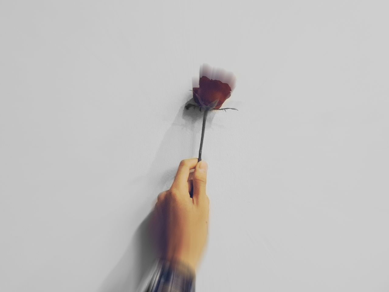 Rosé Roses Flower Hand Inframe Swatch Like4like Newbie Nature Natgeo Discovery Jakarta Cheap Goods First Eyeem Photo