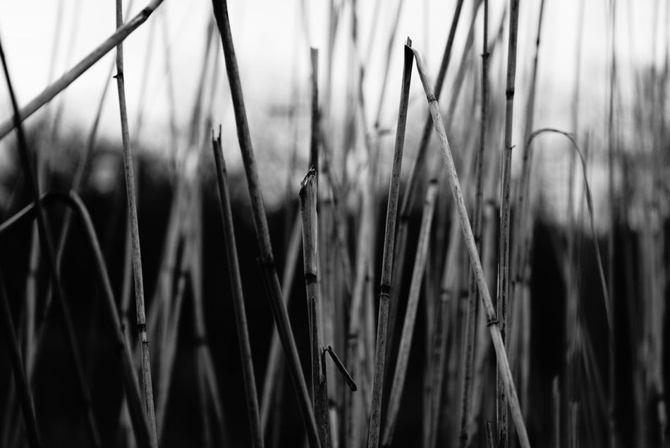 Beautiful stock photos of black & white, plant, growth, close-up, nature