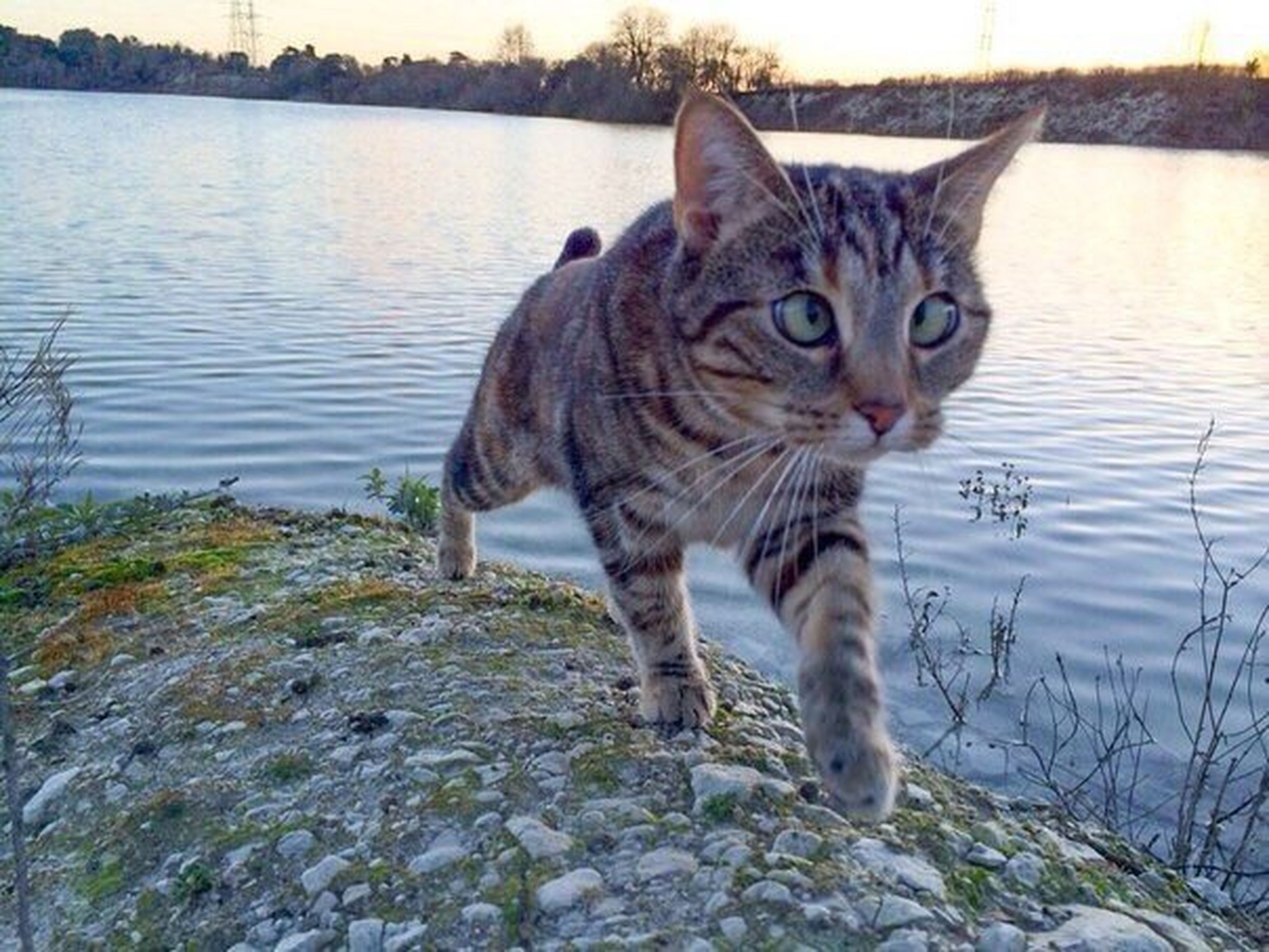 one animal, animal themes, domestic cat, mammal, domestic animals, looking at camera, pets, feline, whisker, portrait, no people, outdoors, nature, day, close-up